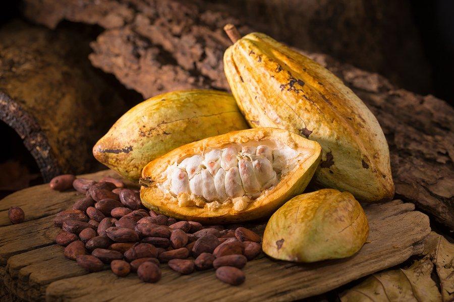 fruto-del-cacao