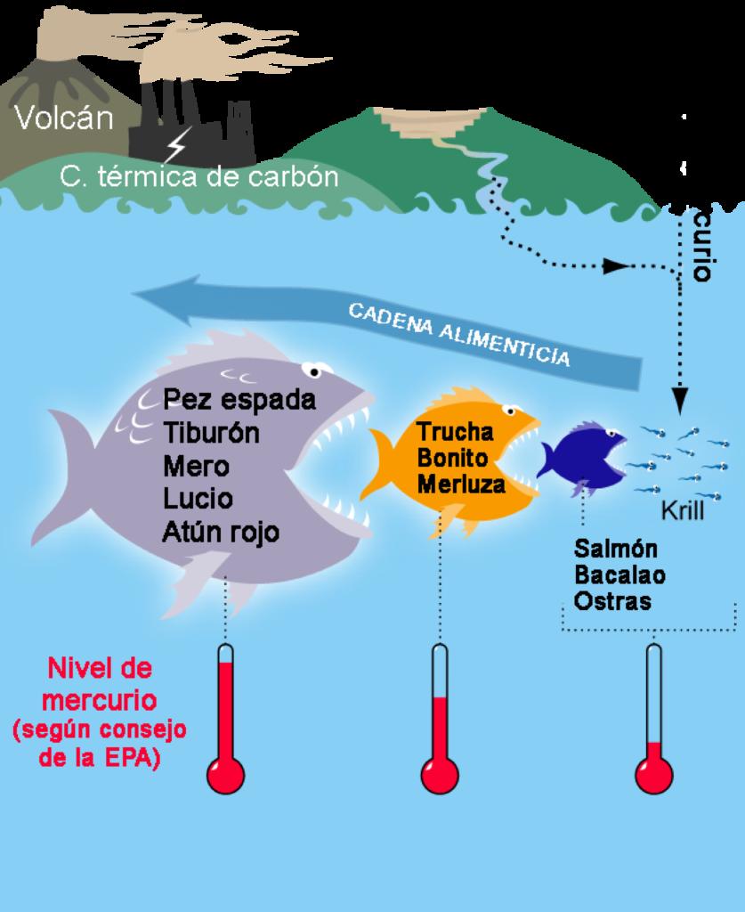 mercurio en peces